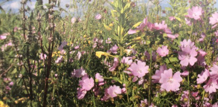Blütenvielfalt durchs Bienenjahr – Jahreshauptversammlung vom Gartenbauverein