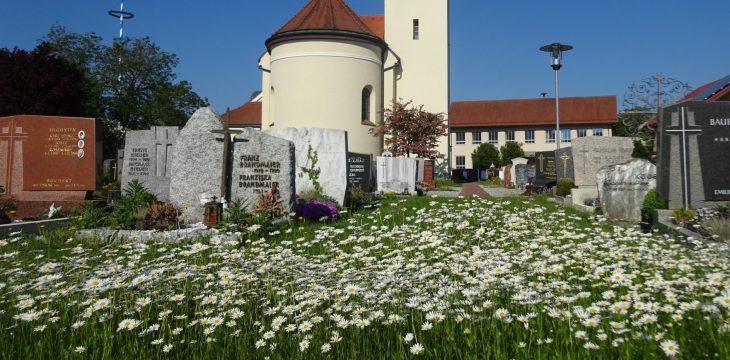 Augenweide im Friedhof